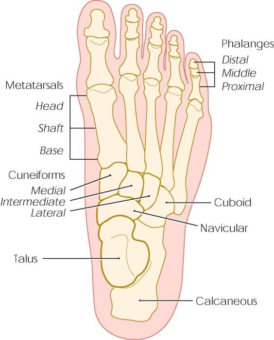 metatarsal-stress-fractures